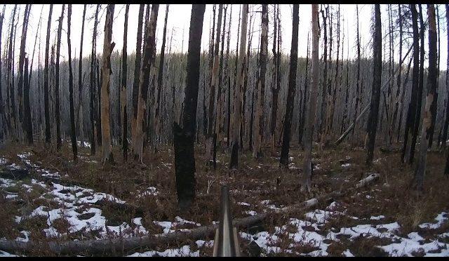 Early Elk Hunt 2017