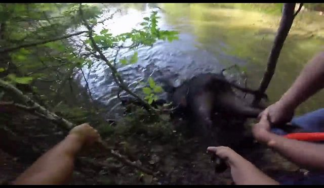 Hog Hunting with Dogs NE Oklahoma