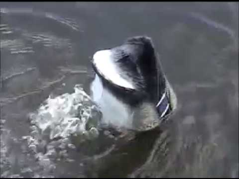 Homemade DIY Motion Feeder Duck Decoy / Swimming Decoy / Goose Hunting