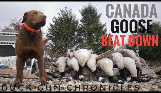 4 Man Limit Indiana Goose Hunt! Urban Marauders