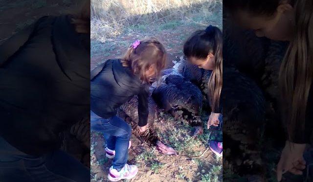 Turkey hunting 2016