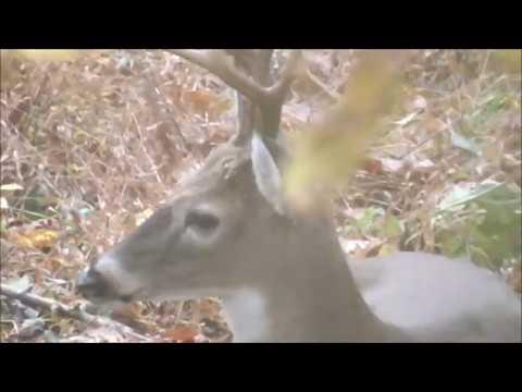 Hunting Season Info - Tennessee Outdoors News