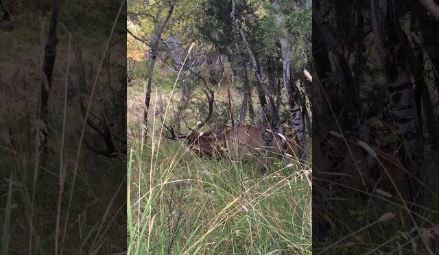 bow hunting elk part 3