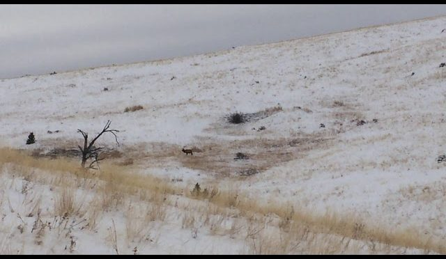 elk hunting late season