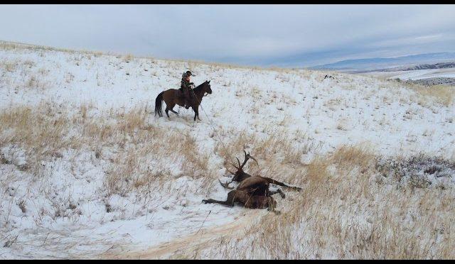 late season elk part 3