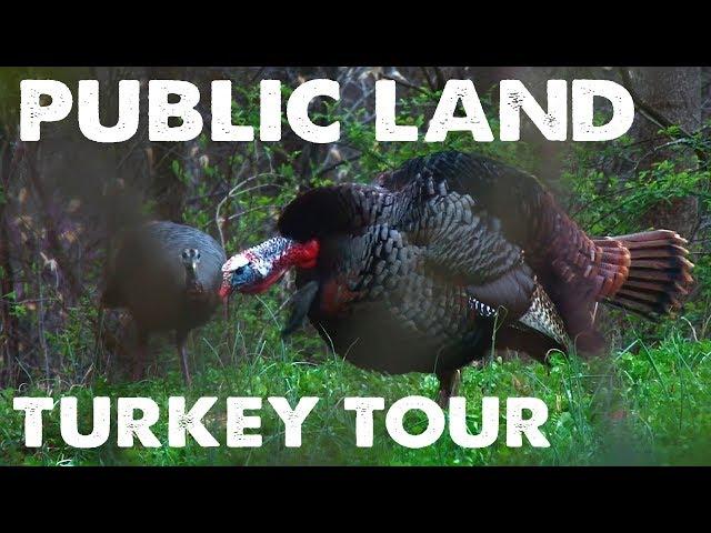 PUBLIC LAND TURKEY TOUR – The Hunting Public