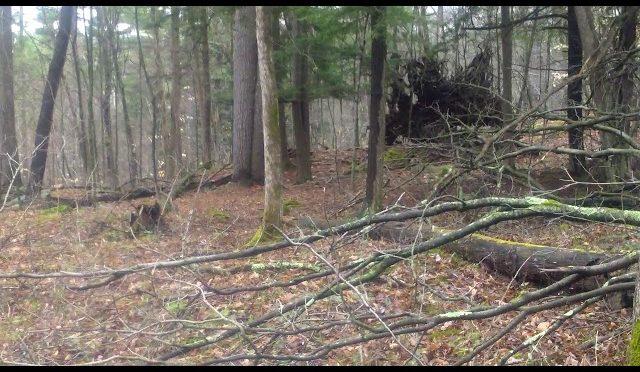 2018 Vermont youth turkey hunt