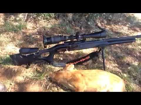 Airgun Hog Hunt (full version coming soon)