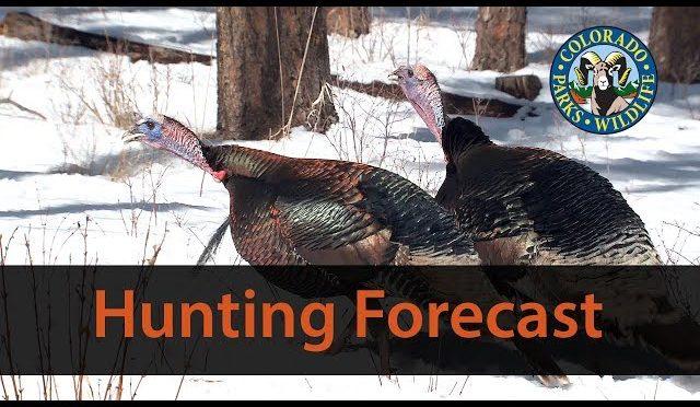 Colorado 2018 Turkey Hunting Forecast