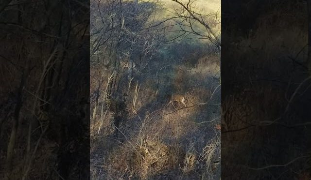 Deer hunting in missouri