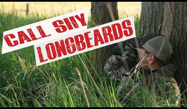 Hunting Call Shy Longbeards