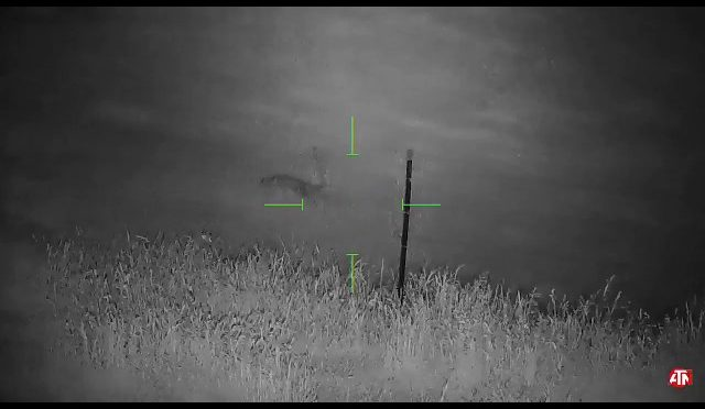 Predator Hunting – Coyote 2