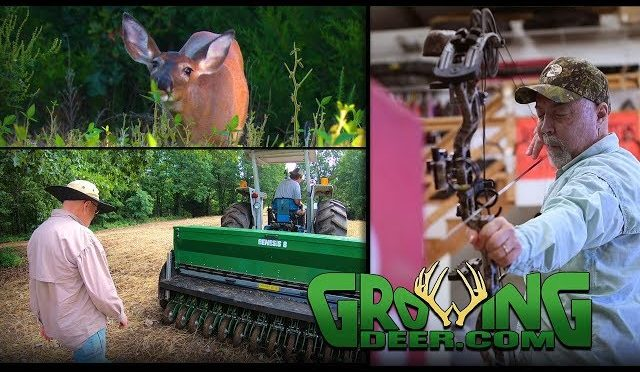 Deer Management | Shooting Accurately, Food Plots (#444) @GrowingDeer.tv