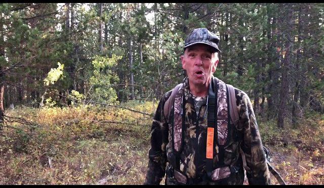 10 Yard Archery Bull Elk Kill from Tree Stand | Idaho Public Land Hunt