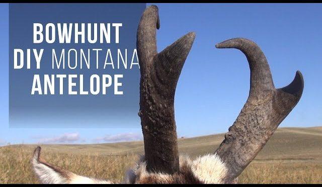 Bowhunting Montana Antelope DIY
