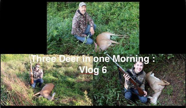 Three Deer in one Morning : Vlog 6