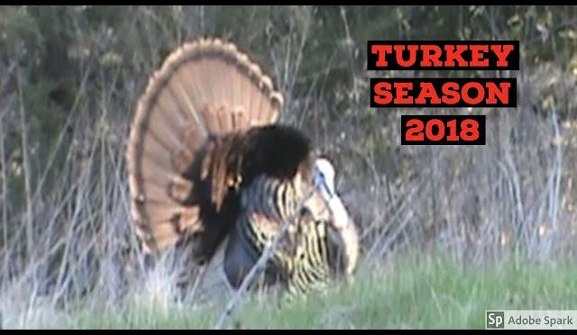 2018 turkey season