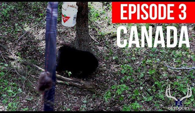 CANADA BEAR HUNT: FIVE BEARS SWARM HUNTER AS NIGHT FALLS – INSANE STORY!!