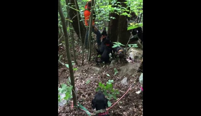 Good bear treed Training season 2018