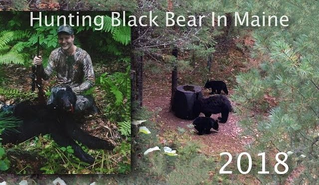 Hunting Black Bear In Maine 2018 | Dunnells In The Wild