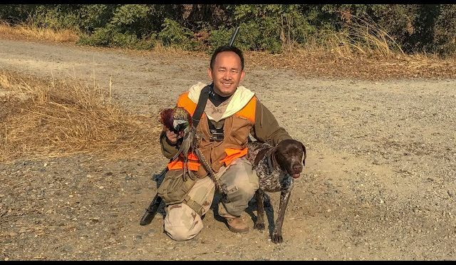 2018 California Pheasant Hunting With GERMAN SHORTHAIRED POINTER on PUBLIC LAND