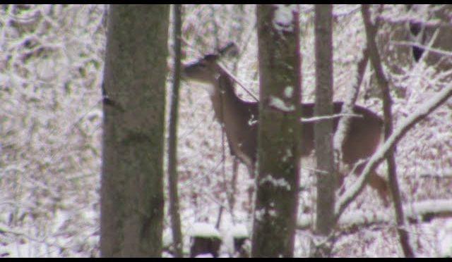 Deer Hunting Michigan
