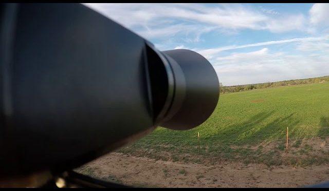 Hog hunting at ranger creek ranch