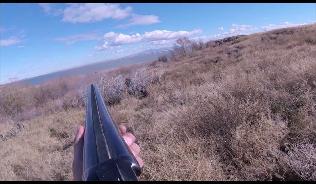 Horsche and Wells Pheasant Hunting