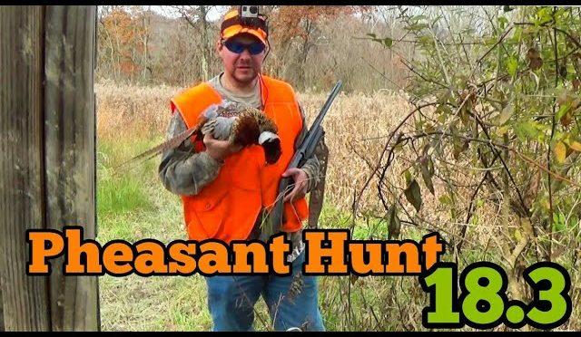 Pheasant Hunt 18.3