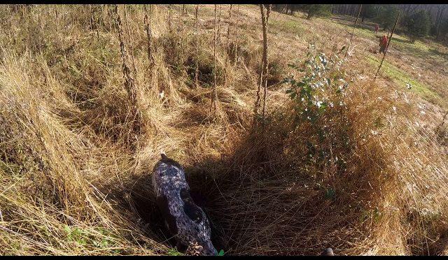 Pheasant Hunting 11.10.18 pt.1