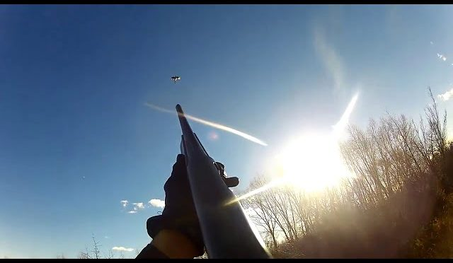 Pheasant Hunting Montana 2