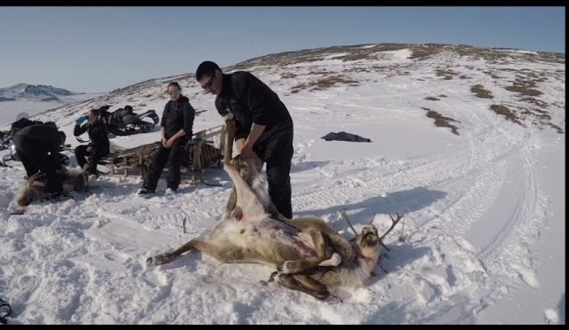 Subsistence Caribou Hunt at Iyat (Bering Land Bridge National Preserve)