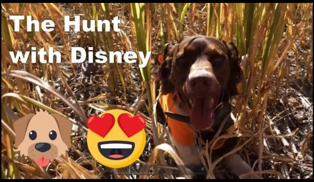 The Hunt with Disney!