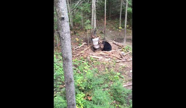 Archery bear hunting