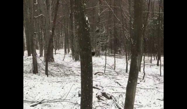 Bear Hunting in The Snow  | Karda Ayı Avı
