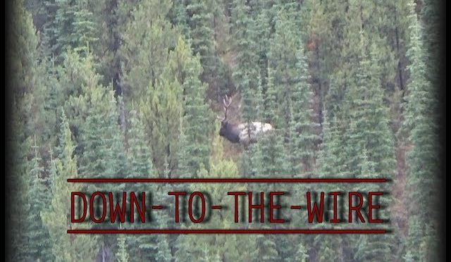 DOWN TO THE WIRE : An Archery Hunt For Bull Elk, to the last day..