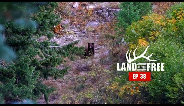 ELK HUNT TURNED INTO A BEAR HUNT EP-38 LAND OF THE FREE 2.0