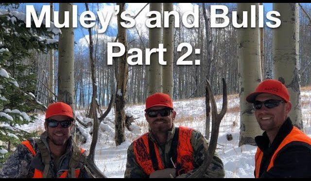 Mule Deer And Elk Hunting Colorado Part 2: