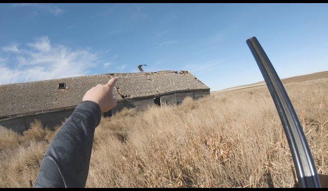 Awesome Pheasant Hunting – South Dakota