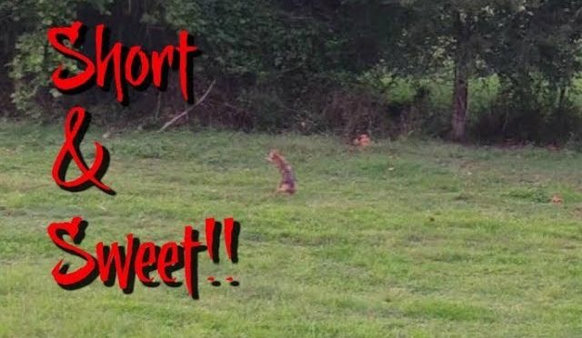 COYOTE HUNTING– SHORT & SWEET!!!