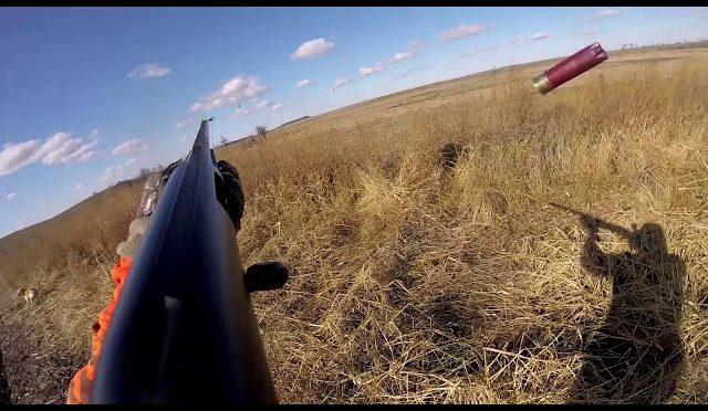Pheasant Hunting in North Dakota 2018 GOPR0230 2