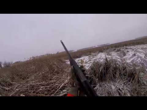 Pheasant Hunting in North Dakota 2018 GOPR1570 1