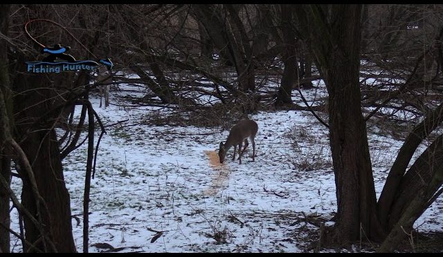 Whitetail Deer hunting New Jersey Winter Bow Jan 19 2019
