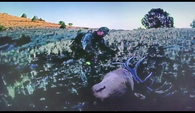 2014 Idaho Archery Elk (0wyhee County)