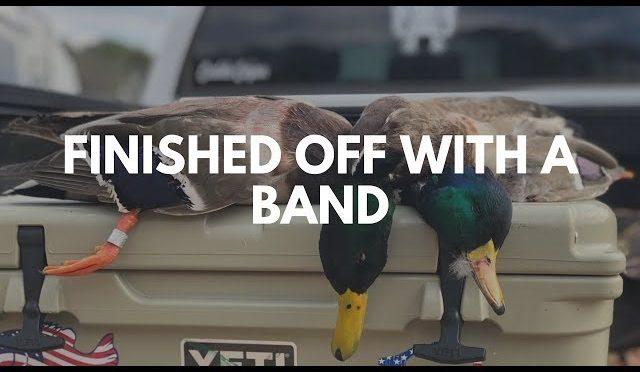 Banded Mallard | Last Weekend of Duck Hunting 2019