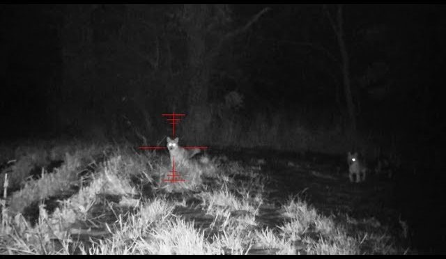 Coyote Hunting – Dirt Naps 9 – Night Thermal and NV