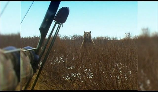 Standing Grizzly Bear with a recurve – Fred Eichler