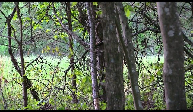 2018 Turkey Hunt #5 Evening hunt