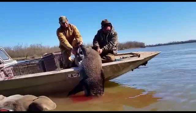 Hog Hunting in Louisiana