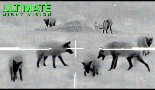 Thermal Predator Hunting | 60 Coyotes Down by O'Neill Ops